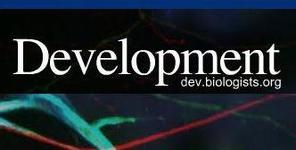 Development, P. Peretto - F. Luzzati